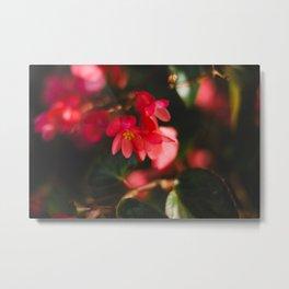 Carmel flowers Metal Print