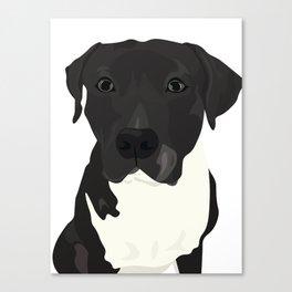 Atticus the Pit Bull Canvas Print