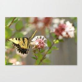 Swallowtail Sipping Nectar Canvas Print