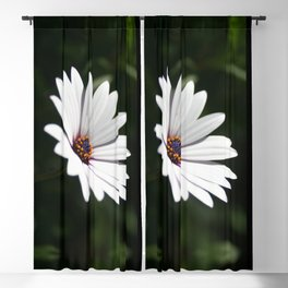 Daisy flower blooming close-up Blackout Curtain