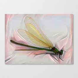 Dragonfly creeps on a white Canvas Print