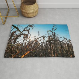 Corn field at sunset in the countryside of Lomellina Rug