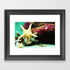 Starfish Framed Art Print