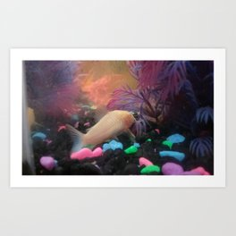 Albino Corydoras Art Print