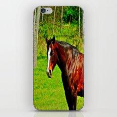 Equine Beauty iPhone & iPod Skin