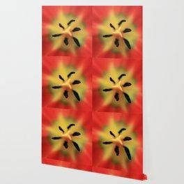 Tulip macro Wallpaper