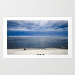 Blue-Bill Ducks Beach Art Print