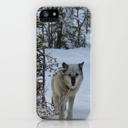 Lone wolf in the snow iPhone Case