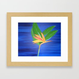 Bird of Paradise - Blue Background  Framed Art Print