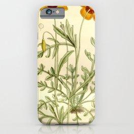 Flower 7636 meconopsis heterophylla iPhone Case