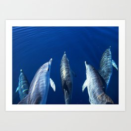 Playful and friendly dolphins Art Print