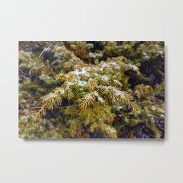 Frost on Leaves Metal Print