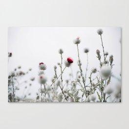thistle patch Canvas Print