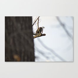Eagle Hunting for Dinner Canvas Print