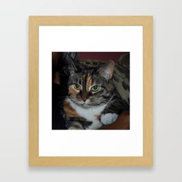 kitkat Framed Art Print