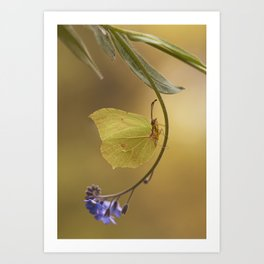 Yellow butterfly on blue forget-me-not flowers Art Print