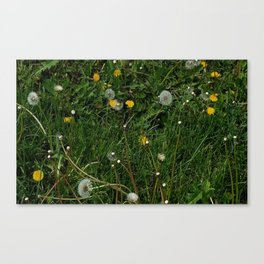 Giant Dandelion Year Canvas Print