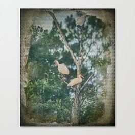White Ibis Birds Roost Lake Waccamaw Green Swamp NC Canvas Print