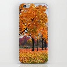Autumn trees 47 iPhone & iPod Skin