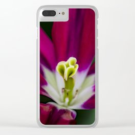 Closeup of a Wide Open Magenta Tulip with Stigma in the Center in Amsterdam, Netherlands Clear iPhone Case