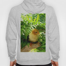 Chicklet Hoody