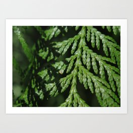 Pointe Evergreen 74 Art Print