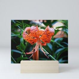 Sunlit Shimmy Mini Art Print