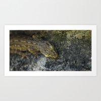 Gecko Roamin' Art Print