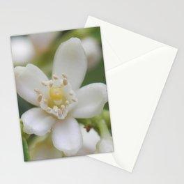 Fortunella (Kumquat) Stationery Cards