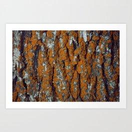 Orange Moss Art Print