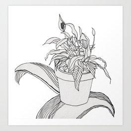 Drawing Peace Lily Art Print