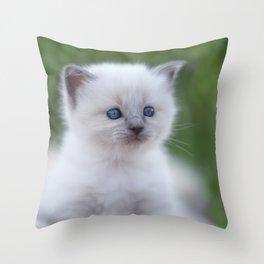 #beautiful #white #kitten #with #blue #eyes Throw Pillow