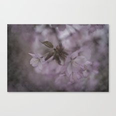The first blossoms of spring Canvas Print