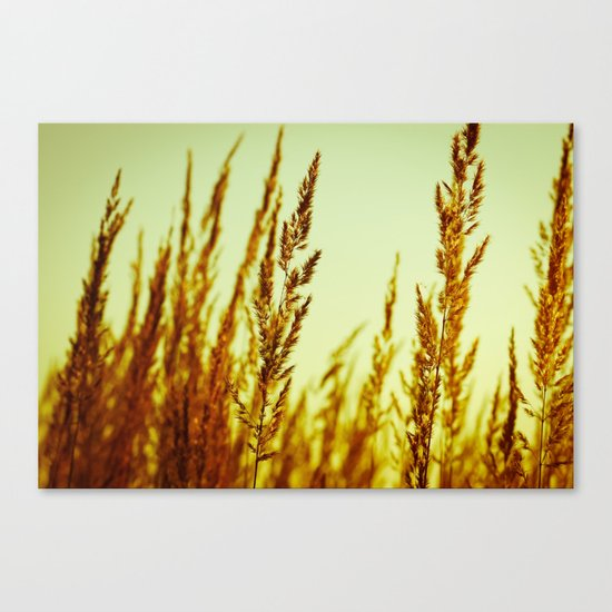 whispering grasses I Canvas Print