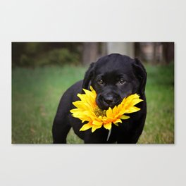 Puppies & Sunflowers Canvas Print