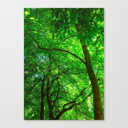 Maple Canopy, Dreamy and Magical Light Canvas Print