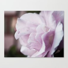 The lilac rose Canvas Print