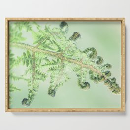 Fern Inversion Serving Tray