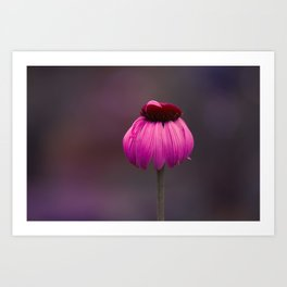 Flower Photography by Pamela Callaway Art Print