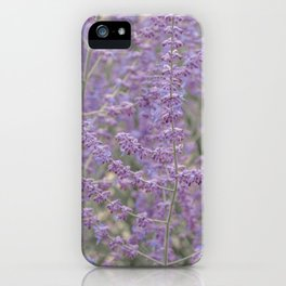 Lavender Field in Brussels Belgium iPhone Case