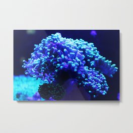 Underwater life Metal Print