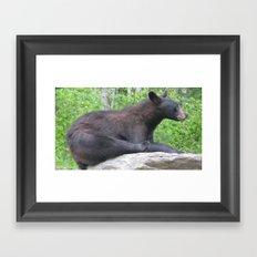 USA - MINNESOTA - Black Bear Framed Art Print