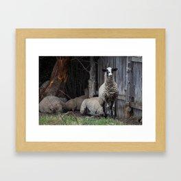 Arroyo Seco Sheep Framed Art Print