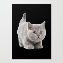 Brittish Shorthair Canvas Print