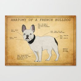 Anatomy of a French Bulldog Canvas Print