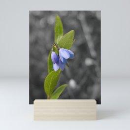 Selective color bluebell flower Mini Art Print