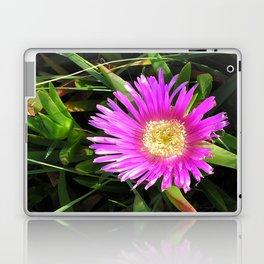 Pink Mesembryanthemum Laptop & iPad Skin