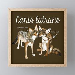 Coyotes in love Framed Mini Art Print