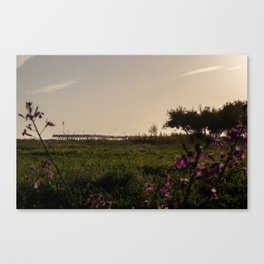 Ventura at Sunset Canvas Print