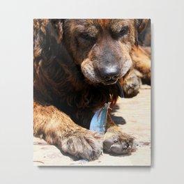 Dog Eating Fish Metal Print